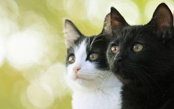 猫なんかよんでもこない。.jpg