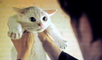 猫侍.jpg